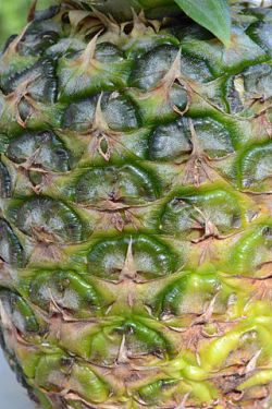 320px-Pineapple_detail